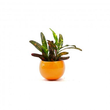 Magnet Croton orange