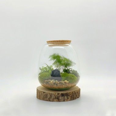 "Kit Terrarium DIY ""Léon"""