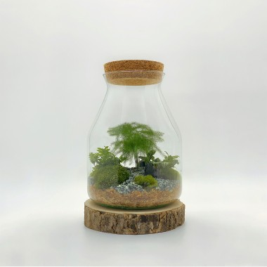 Kit terrarium DIY Zantrop